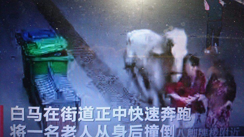 視頻顯示,白馬在大街上狂奔時,一名老婦人被撞倒。圖:擷自騰訊視頻