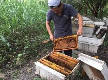 花蓮養蜂人家面臨無蜜可採。圖/民眾提供