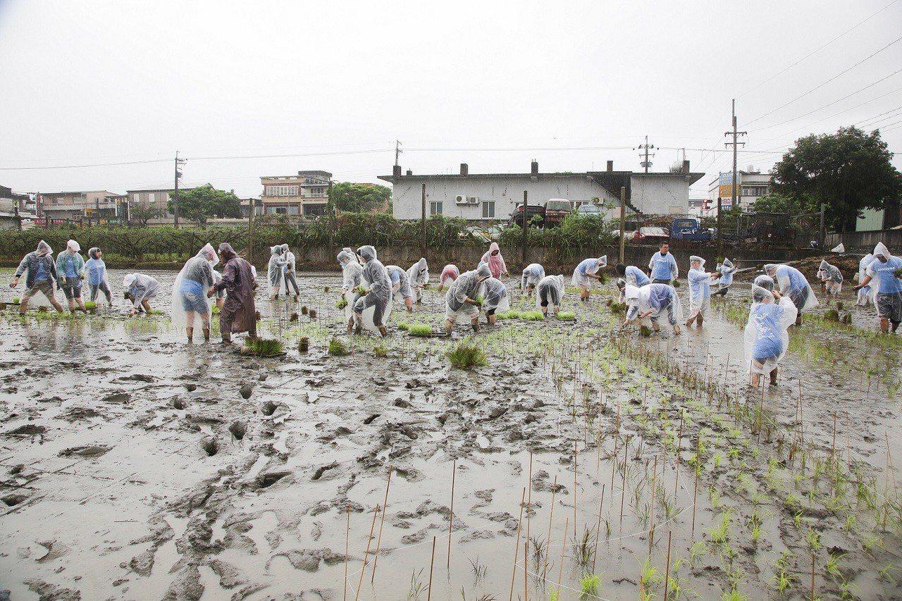 今年3月,台灣三星總經理率領三星員工到宜蘭擔任稻田認養計畫一日志工,並邀請家扶基...