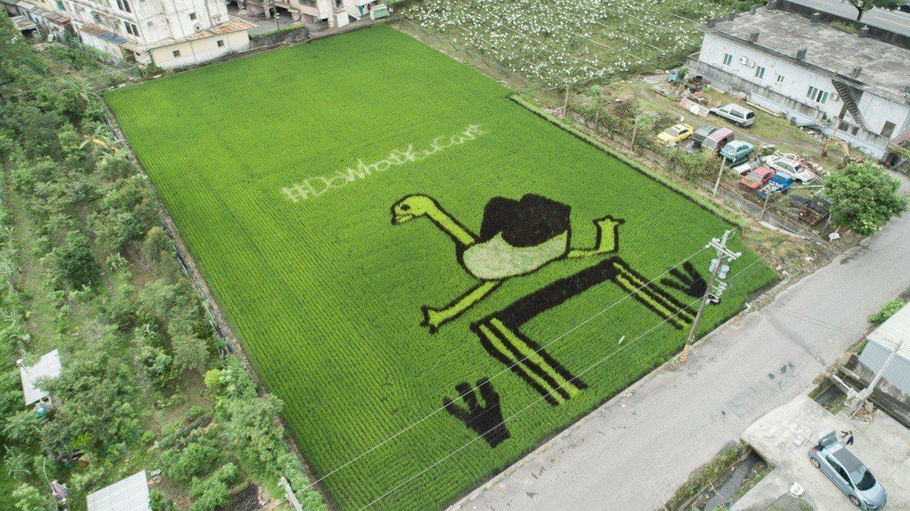 台灣三星「星關懷」稻田認養計畫,今年首度打造稻田畫布,用學飛的鴕鳥圖樣展現「挑戰...