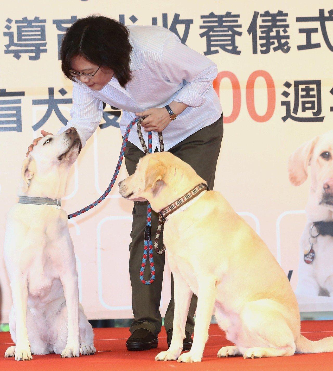 總統蔡英文收養2隻流浪貓、3隻導盲犬,年初接受訪問時大曬與愛犬的互動。 圖/聯合...