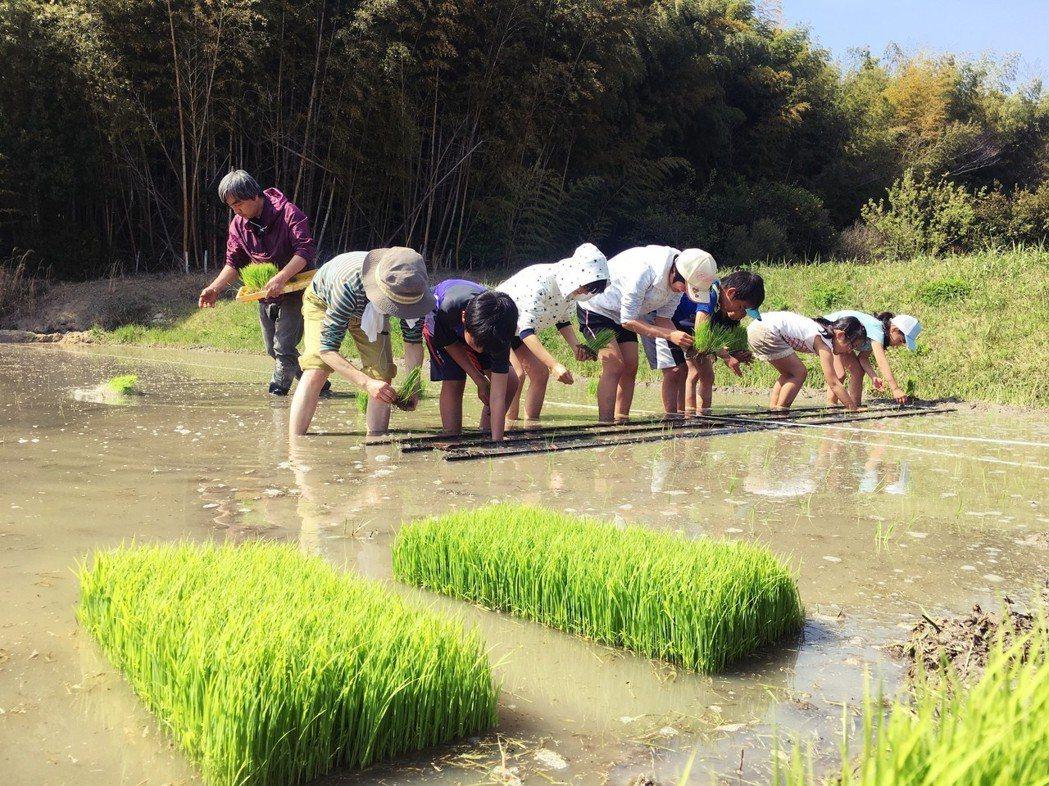豊島研習會:午餐後,參與活動的人員分為兩組,輪流插秧與採柑橘或掘竹筍。大人小孩們...