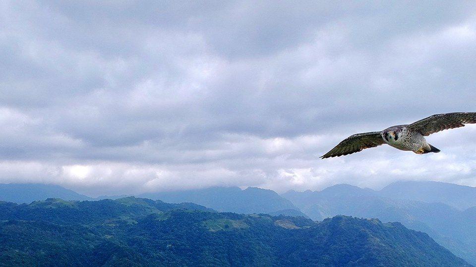 李東泰空拍時曾巧遇大冠鷲。圖/李東泰提供