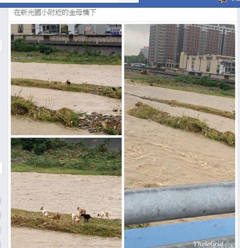 台中連日大雨,有民眾看到旱溪金母橋下有數隻流浪犬困在沙洲上。圖/取自臉書