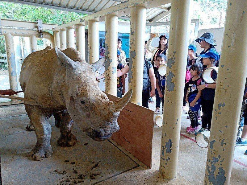 田寮國小學童們親手替白犀牛刷背和量體重,近距離體驗照顧工作好興奮。圖/莊福文教基金會提供。