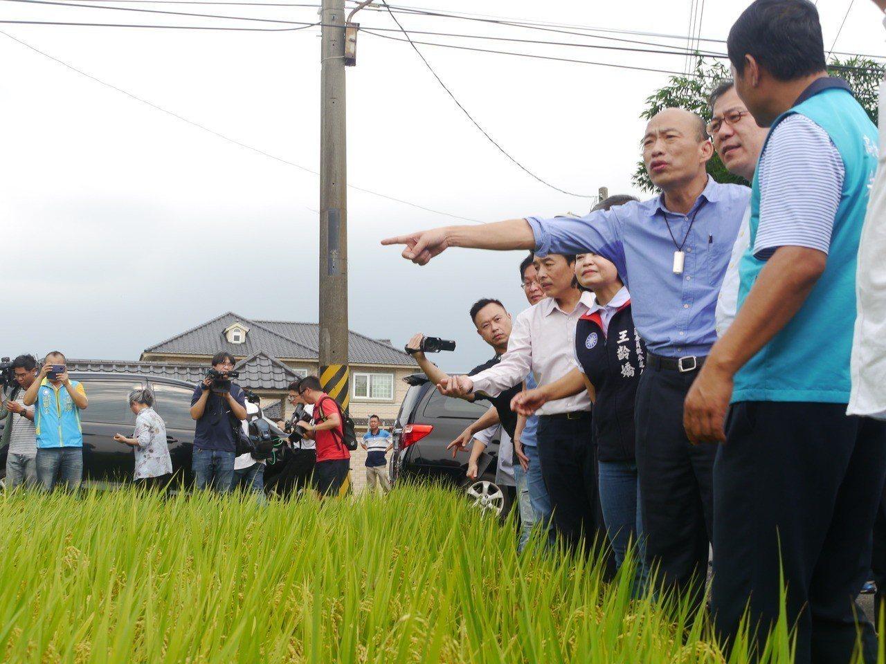 高雄市長韓國瑜(右三)視察美濃稻田受損情況。記者徐白櫻/攝影
