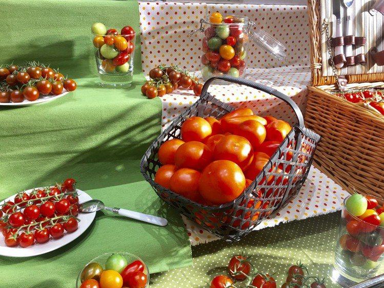 番茄方舟推出各式彩色番茄相當繽紛。記者江佩君/攝影