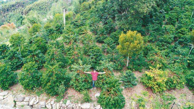 方政倫在阿里山上擁有一整片的藝伎園區。 攝影/陳立凱