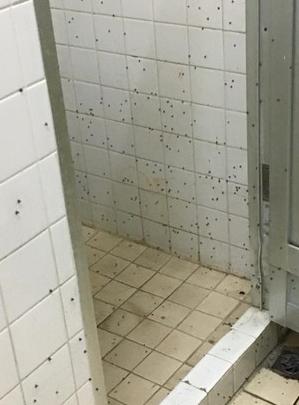 女生宿舍浴室出現滿牆的蛾蚋,讓女大生直呼崩潰。圖/擷取自爆料公社