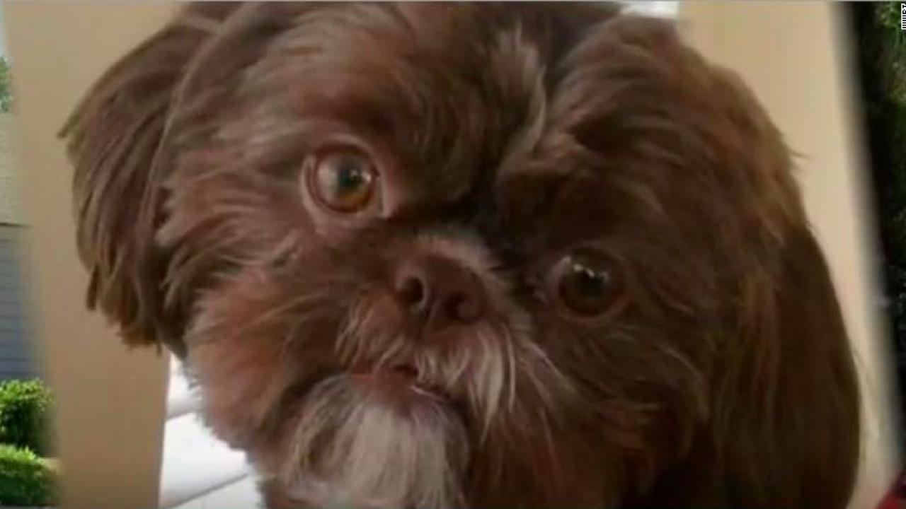美國維吉尼亞州柴斯特菲爾德動物收容中心3月收容的混種西施狗「艾瑪」。「艾瑪」已故...