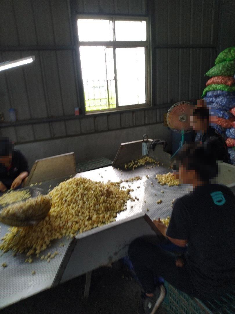移民署雲林縣專勤隊一舉查獲5名失聯移工。圖/專勤隊提供