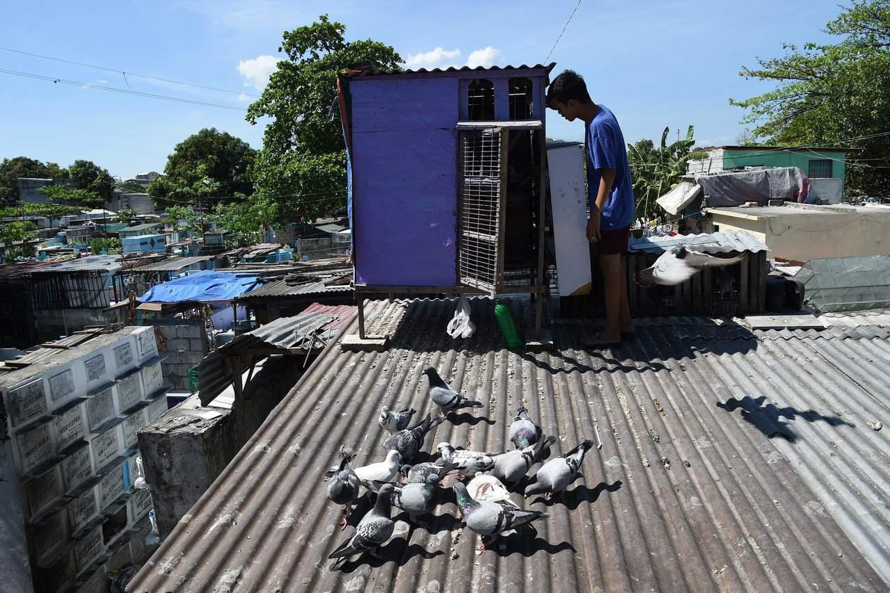 一名15歲的鴿友檢查並維護他的鴿舍。 (法新社)