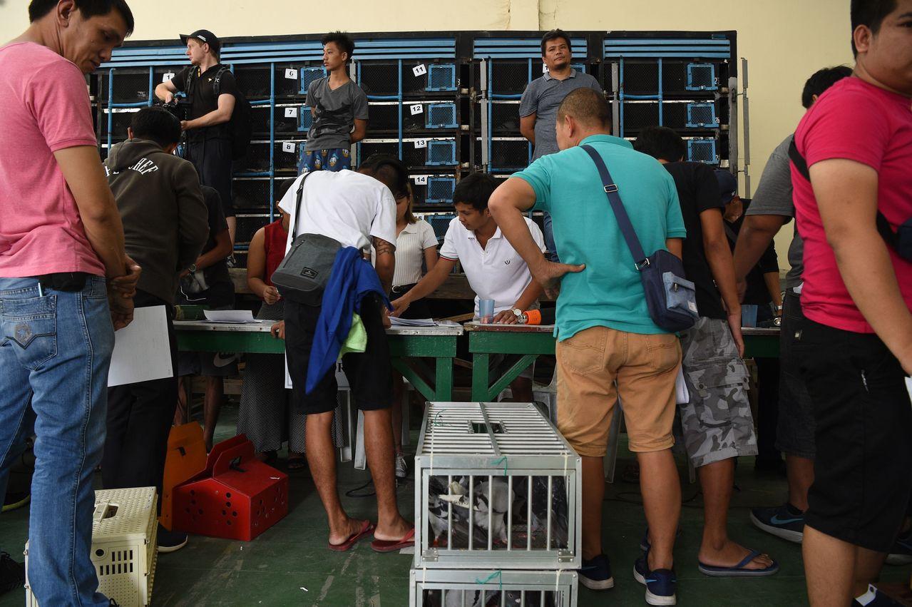 鴿友登記參加菲律賓賽程最長、全程600公里的麥克阿瑟鴿賽。 (法新社)