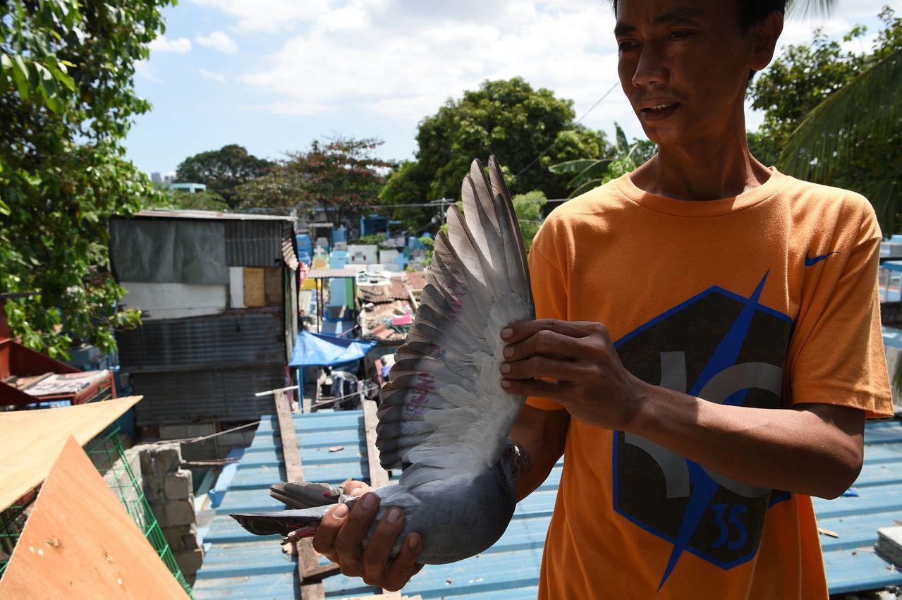 一名賽鴿愛好者展示他飼養的賽鴿。 (法新社)