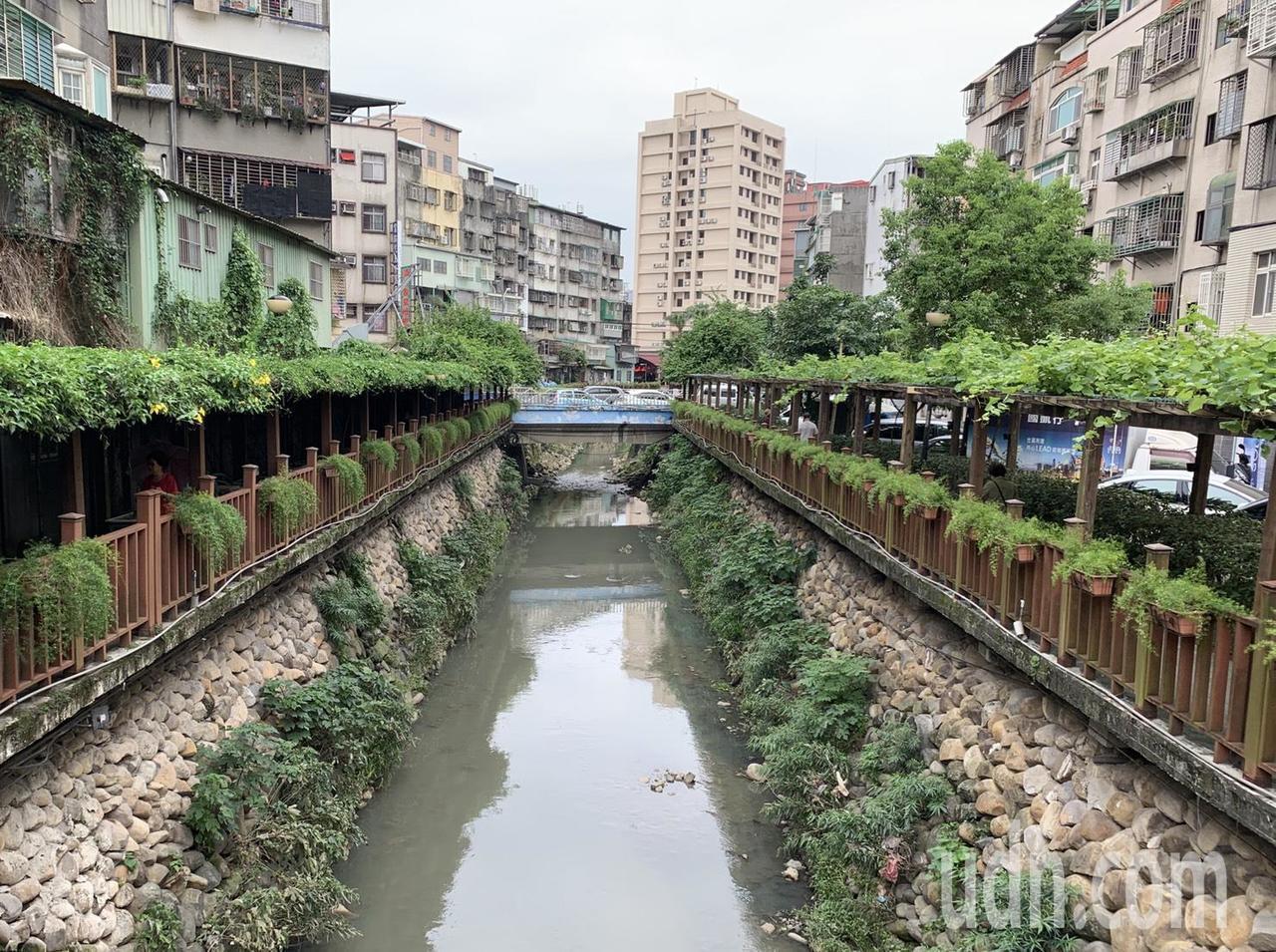 新北市土城希望之河河畔做綠化,種櫻花、葡萄等植物。記者魏翊庭/攝影