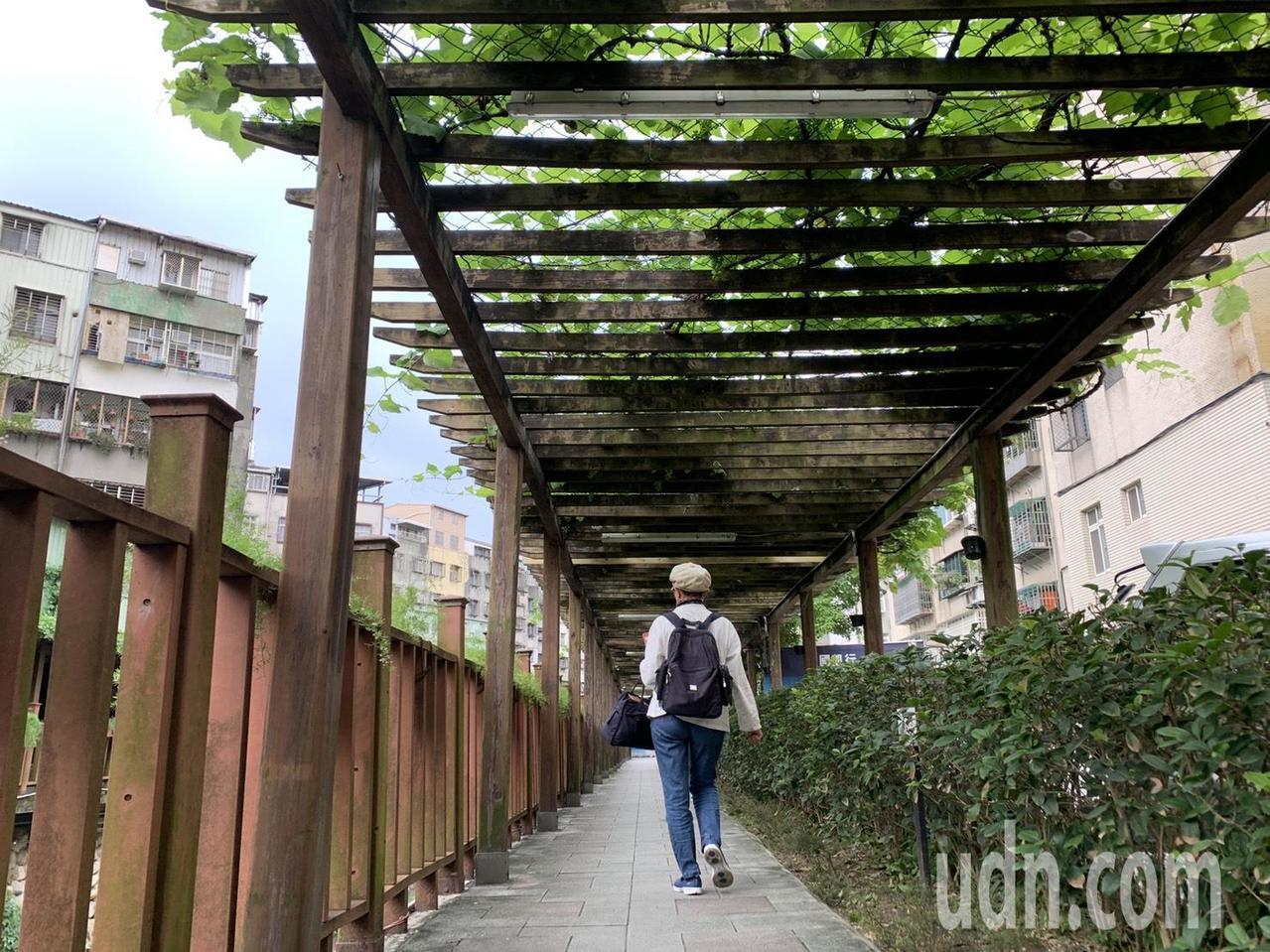 新北市土城希望之河畔種30公尺長的葡萄走廊。記者魏翊庭/攝影