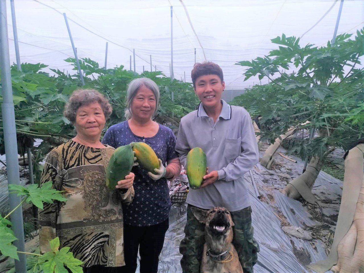 31歲女中士張雅柔(右)4年前放棄升士官長選擇退役,返回台南山上區種木瓜並陪伴8...