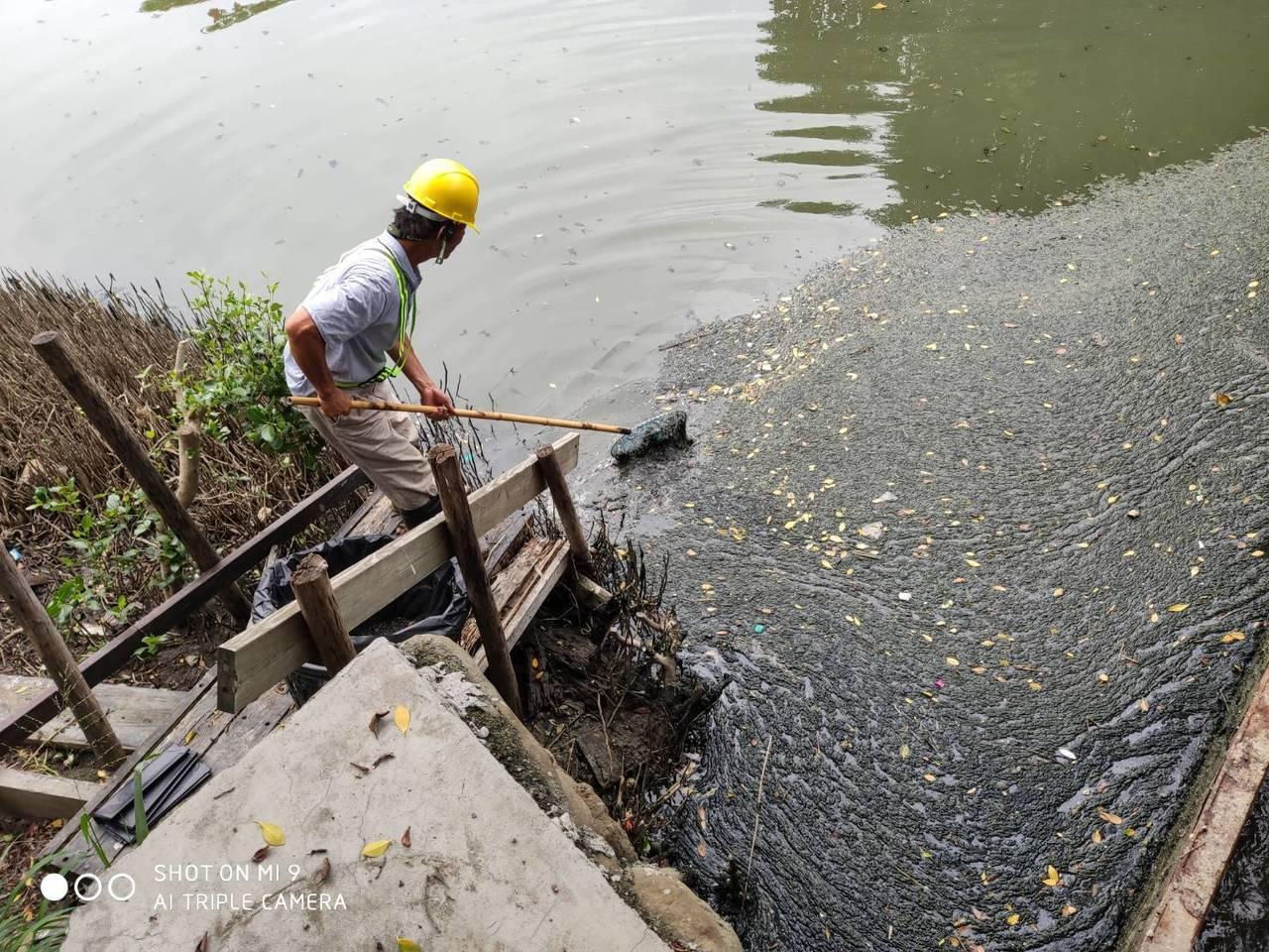 中都濕地公園水質變差,高雄市養工處立即派員查看,並立即清理漂在水面的垃圾。記者謝...
