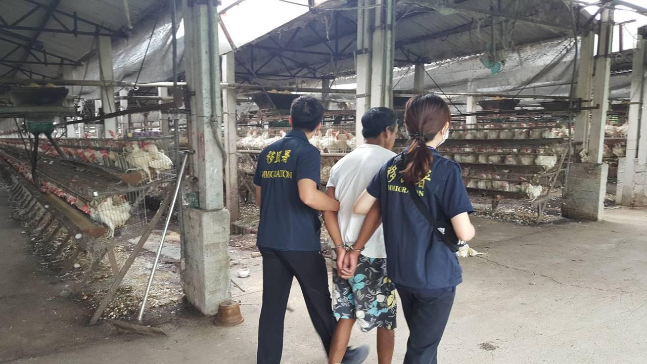 移民署今天在高雄市路竹區養雞場,查獲印尼籍逃逸移工。記者林保光/翻攝