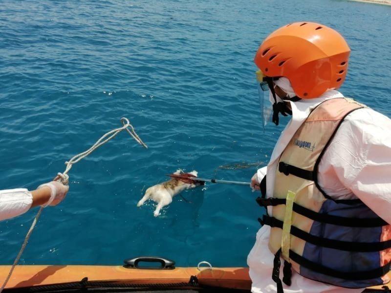 海巡署南部分署第五岸巡隊小琉球安檢所昨日(25日)上午11點,接獲民眾報案於中澳...