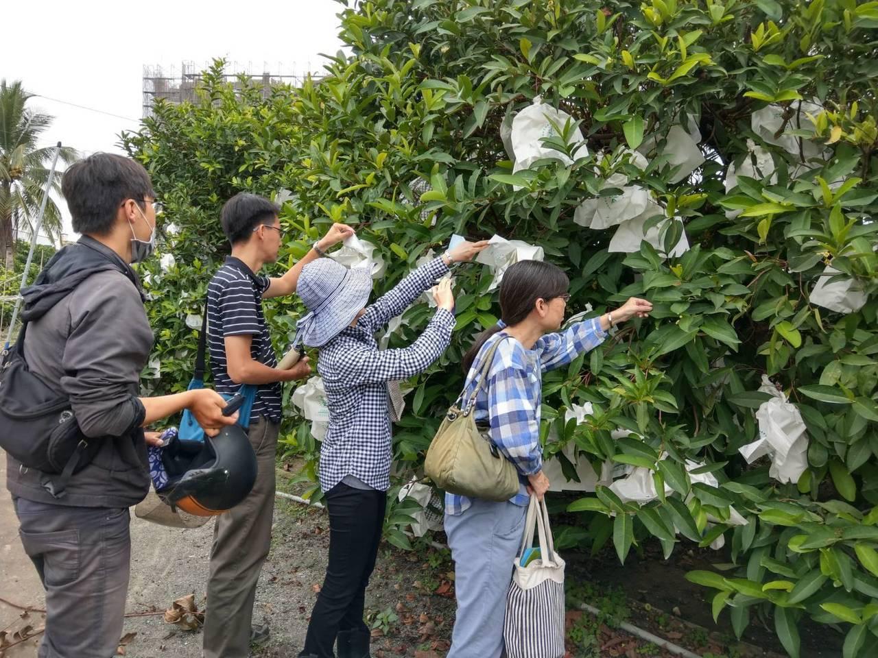 台南市政府農業局邀請台南區農業改良場、農糧署南區分署、區公所等組成勘查小組,前往...