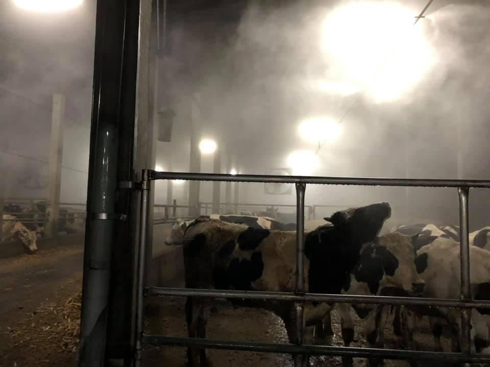 牛流行熱稱為「牛隻的登革熱」,靠病媒蚊傳播疫情,雖不會跨物種傳染,嚴重者卻會造成...
