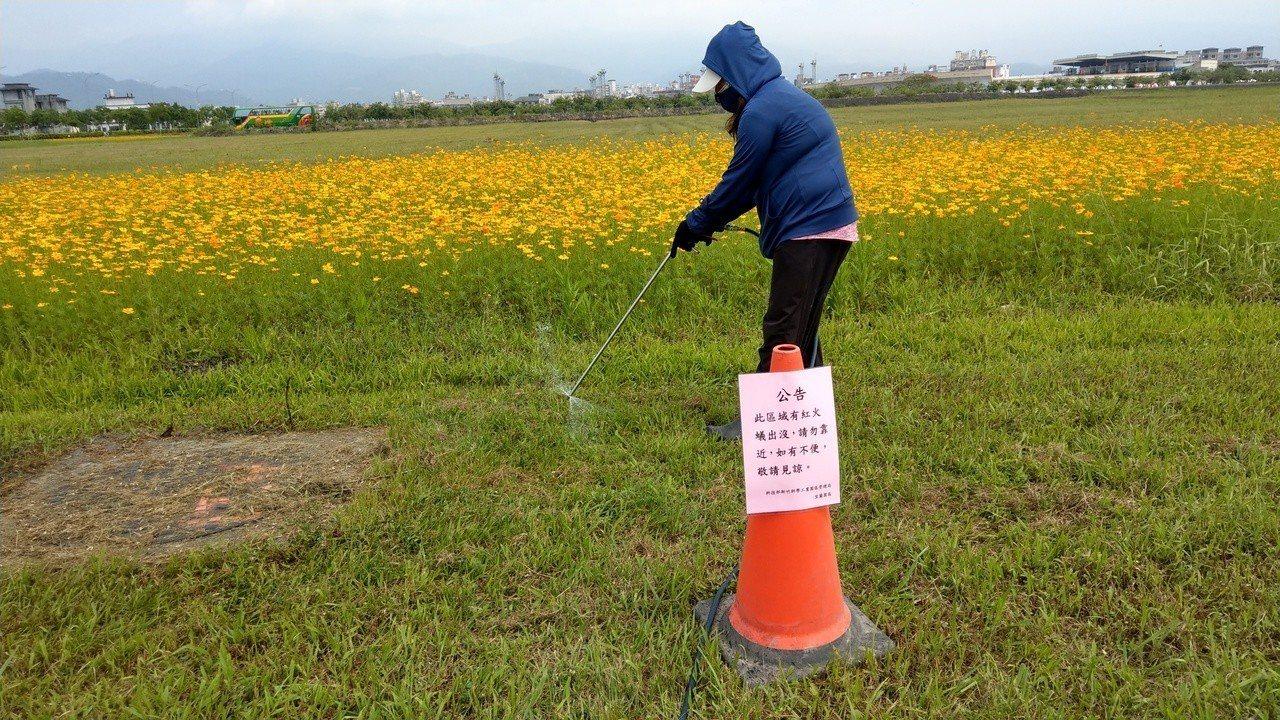 宜蘭淪陷成為紅火蟻疫區,今天以洋芋片誘毒蟻出穴,再灌藥撲殺。記者戴永華/攝影