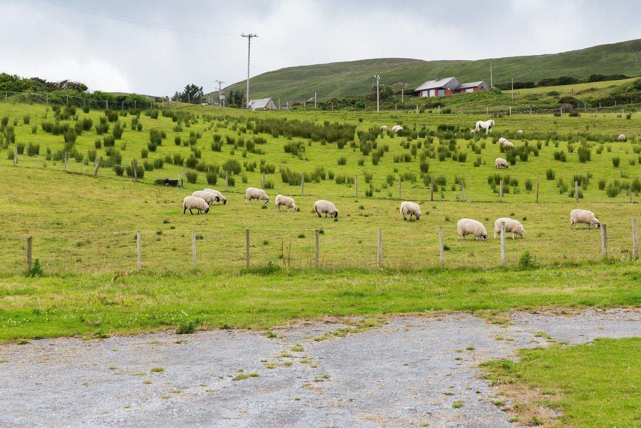 全球暖化的隐形元凶!畜牧业不能说的秘密 - udn 联合新闻网 -6358108