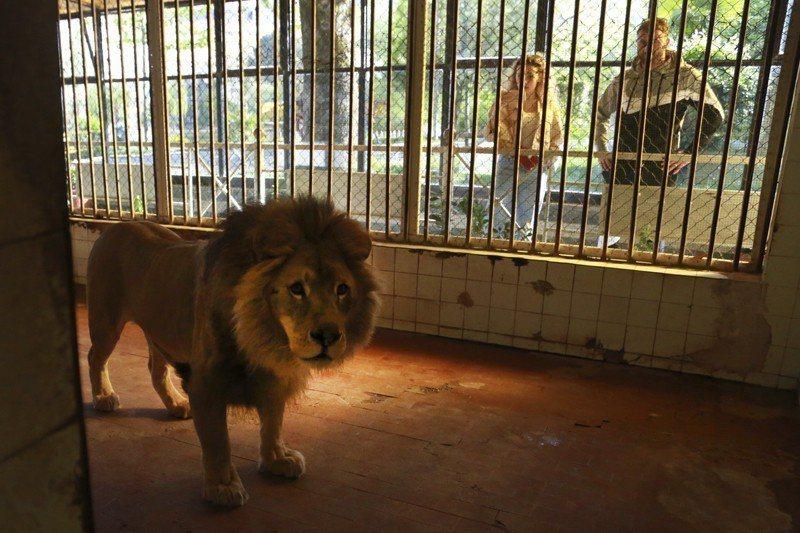 動物園裡的動物經常有反覆行為,事實上是因為無聊、壓力或孤獨而出現的「刻板行為」。...