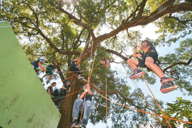 彰化縣同安國小8名應屆畢業生,將爬上約15公尺高的樟樹,做為自己的畢業獻禮。圖為去年攀樹照。 圖/同安國小提供