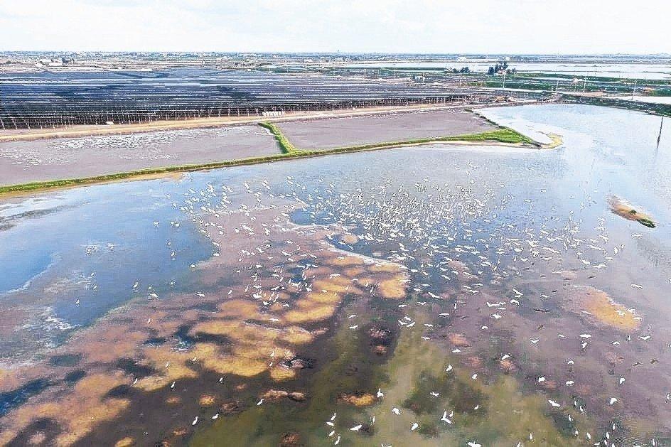 韋能能源在嘉義布袋的太陽能案場,致力維護候鳥棲息地,包括水源、水質及周圍生態的保...
