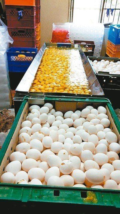 元山蛋品為牟取暴利,用已經發霉、長蟲,沾染雞屎的次級蛋,打成液蛋賣出。 本報資料...