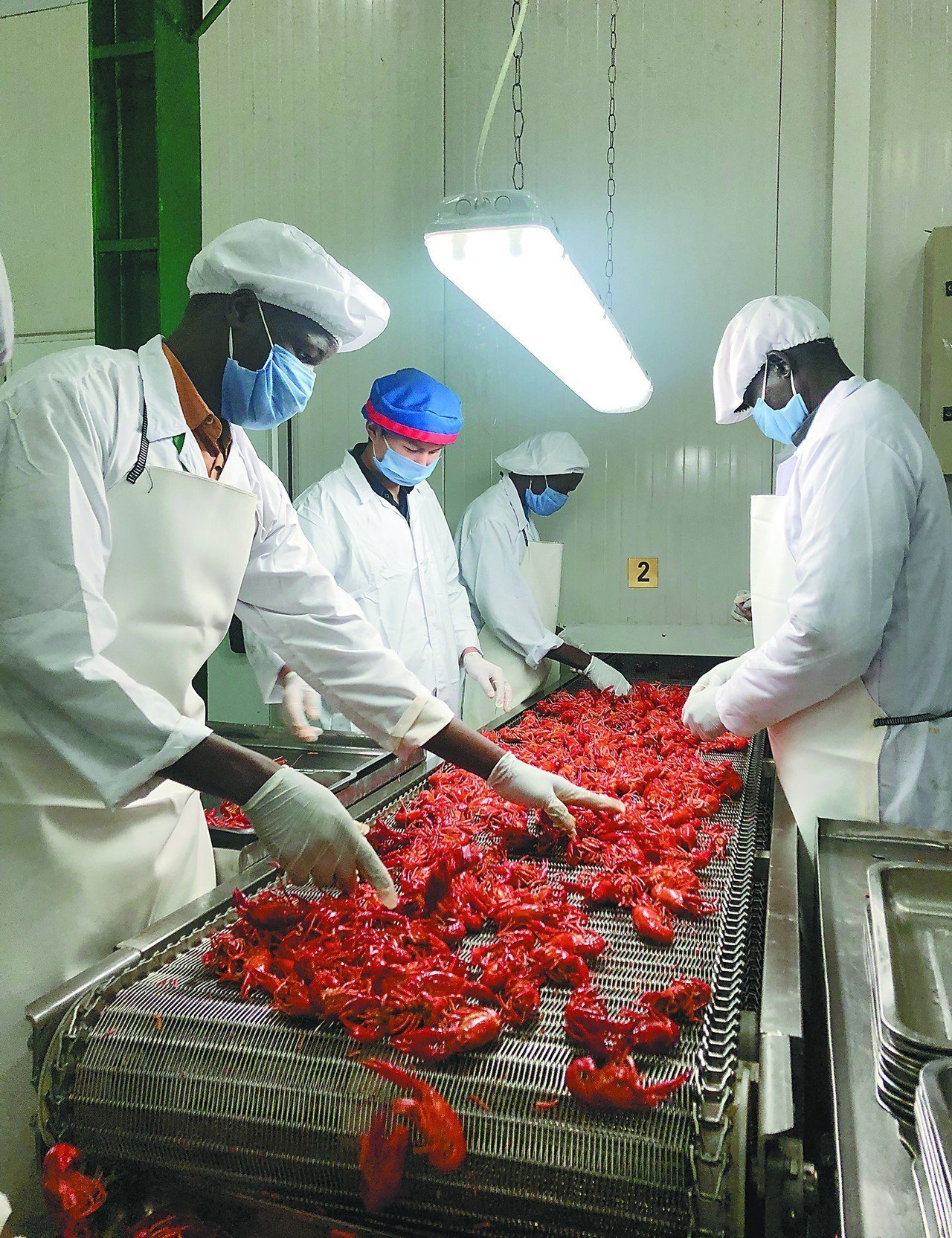 各國都不要的小龍蝦 全部送進中國人嘴裡