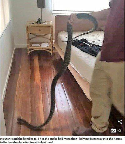 女子與蛇共睡5小時,起床後反應冷靜。圖/取自《每日郵報》