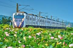 動物彩繪列車回來了!6月3日停靠通霄 送白沙屯媽小神衣