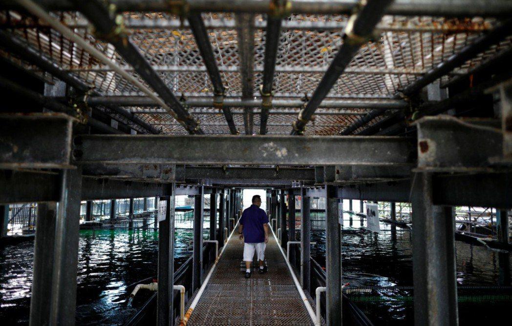 新加坡阿波羅水產養殖集團執行長Ng巡視公司的垂直養殖魚池。(路透)