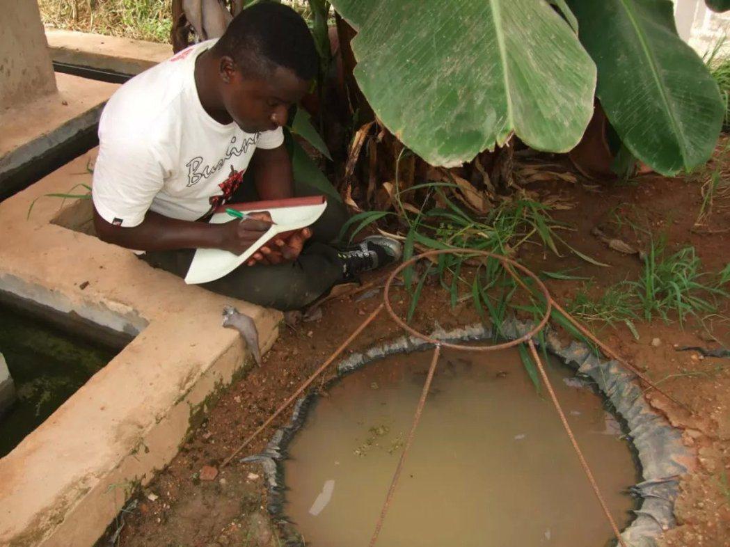 本研究的作者之一Etienne Bilgo博士在觀察蚊子的野外繁殖(Credit...