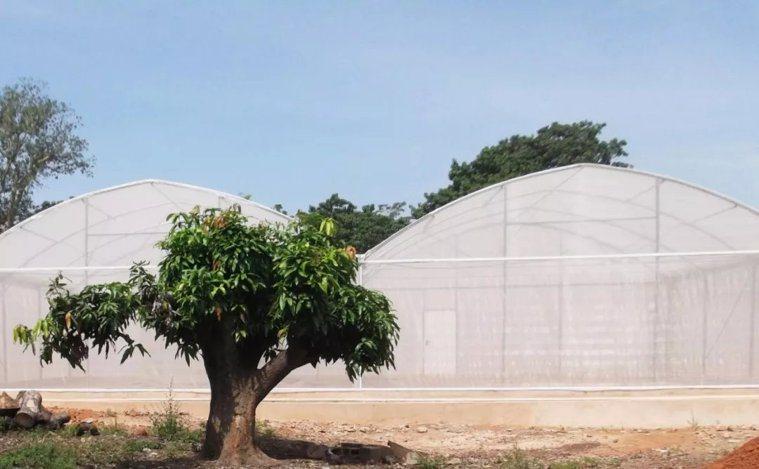 這些設置在西非的大棚提供了良好的模擬環境(Credit:Etienne Bilg...