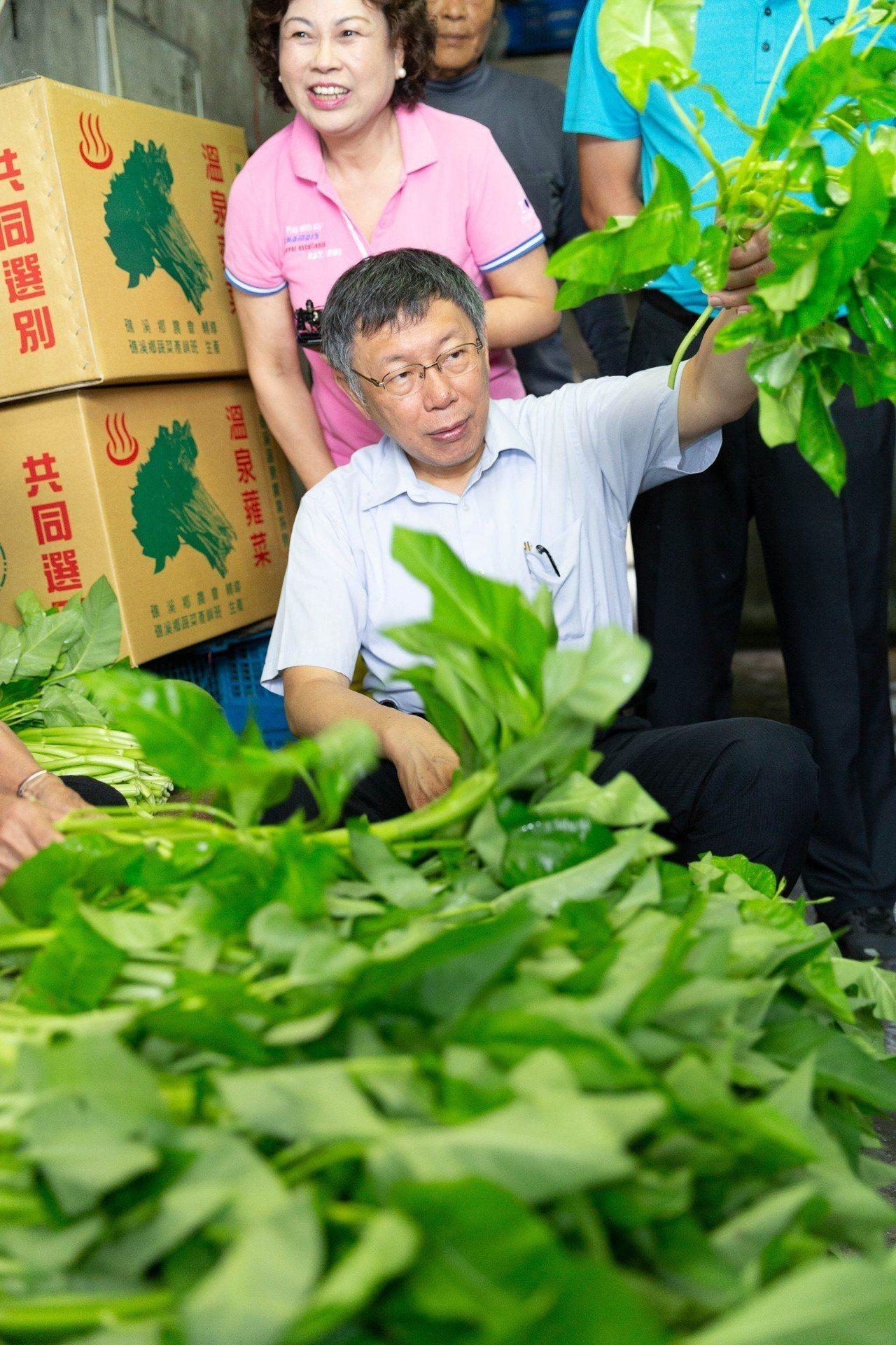 台北市長柯文哲參觀礁溪溫泉空心菜栽種,他親自採摘並且綑綁空心菜,與農民互動接地氣...