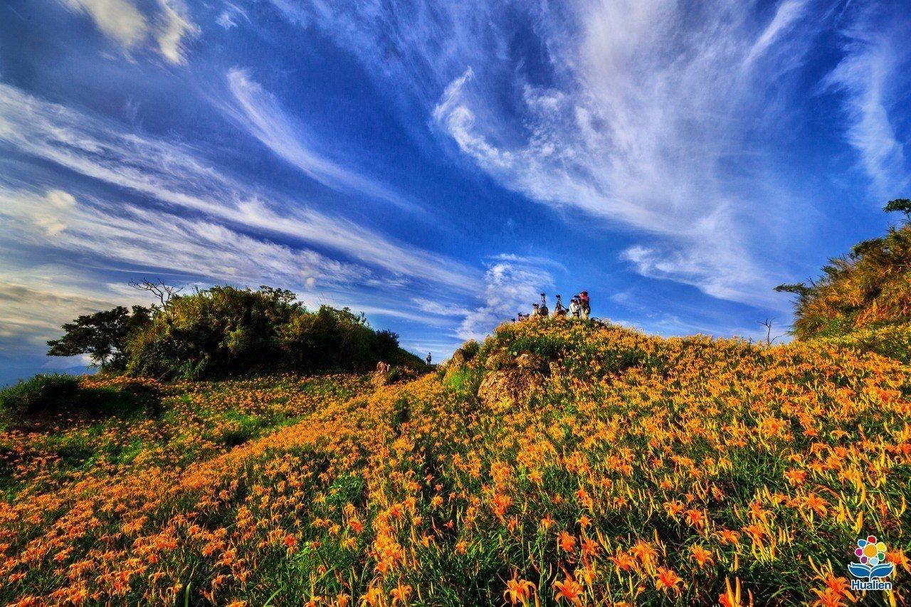 花蓮赤柯山、六十石山的金針花,每年8、9月間盛開,鋪成最美麗的金黃花毯。圖/縣府...