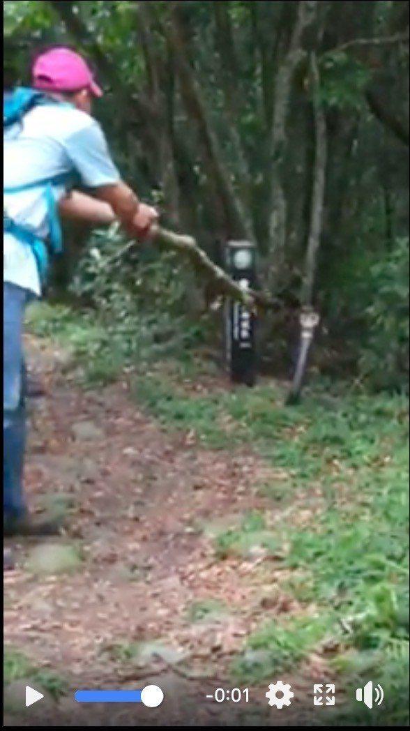 台中市北屯大坑登山步道近來出現一條巨無霸的眼鏡蛇,退休刑警發布到臉書,呼籲山友注...