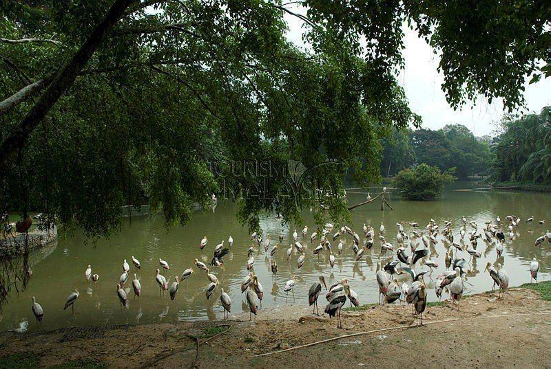 ▲馬來西亞天空之鏡玩法-瓜拉雪蘭莪自然公園 (圖/Tourism Malaysia)
