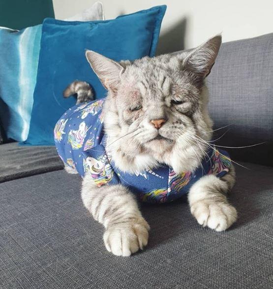 英國6歲短毛貓「托比」(Toby)患有罕見的遺傳病「先天性結締組織異常」(Ehl...