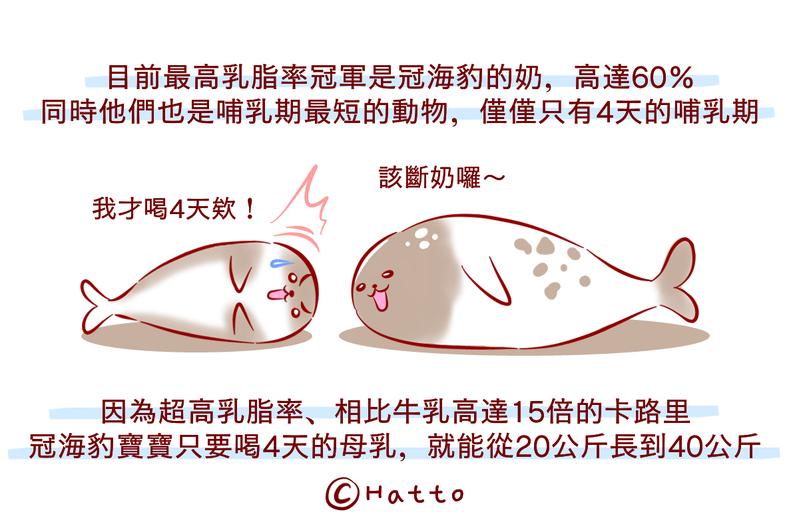 【動物冷知識】小孩超好養?冠海豹寶寶喝奶4天竟暴肥「20公斤」!