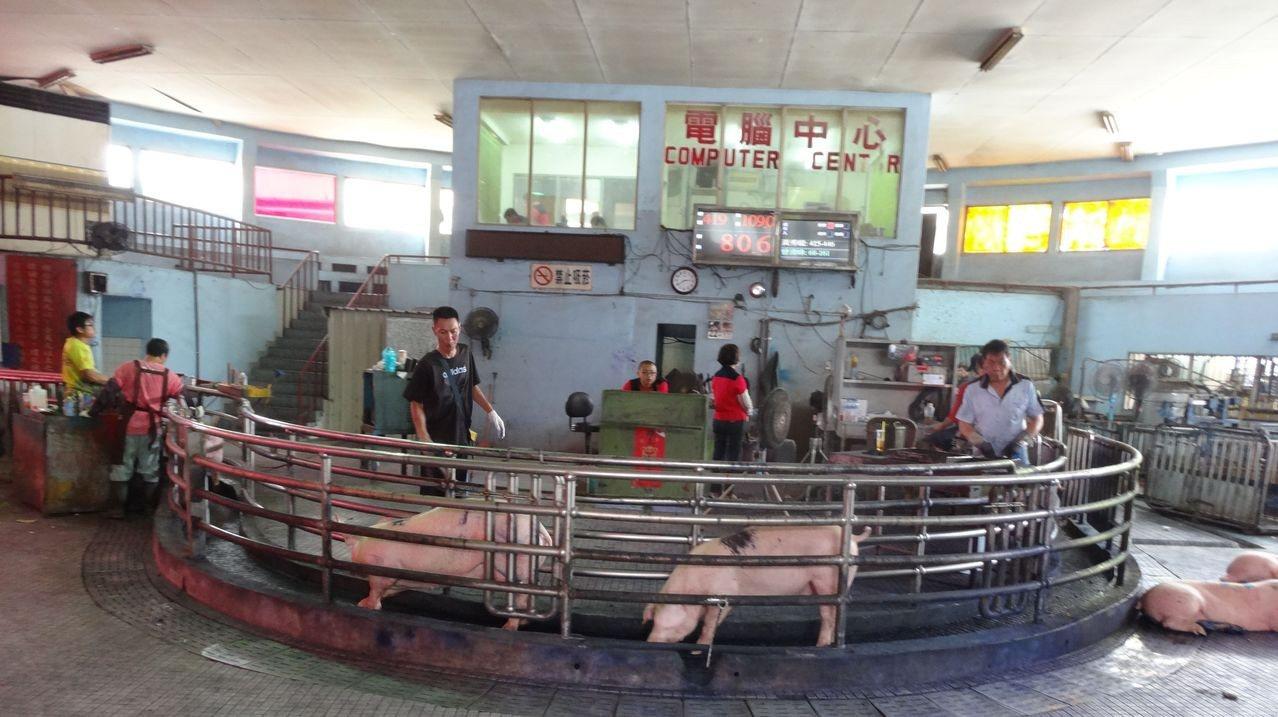 今天是端節前毛豬拍賣量最高峰,嘉義縣肉品市場拍賣價回穩到每公斤76元,後天端節起...
