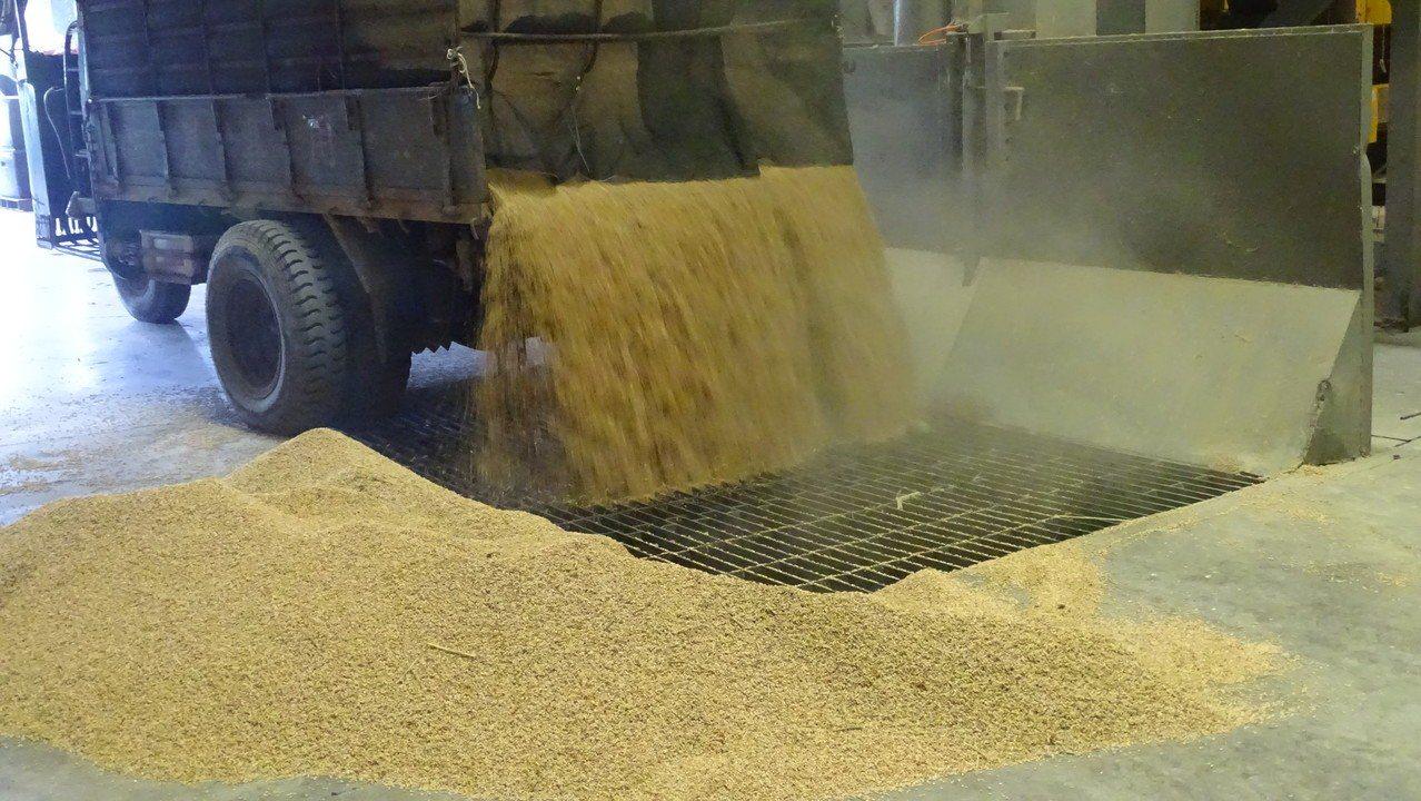 溪州鄉農會今天開倉收購公糧,不少農民一早就載運剛收割的濕穀到農會,是彰化縣最早收...