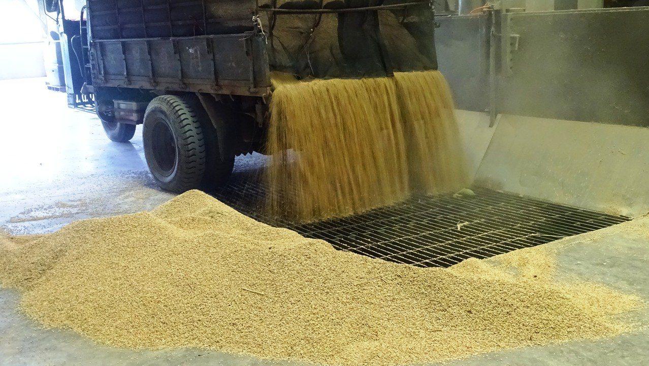 今年溪州比往年提前開倉收購公糧,還搶得彰化縣頭香,為什麼?原因很簡單:農民搶收!...