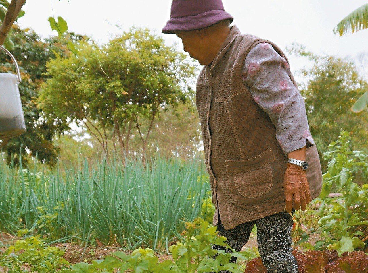 母親總愛在「天天來」的旱田種各類蔬果。 圖/巴代提供