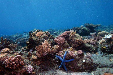 李濬勳/二氧化碳排入大海的「減碳」迷思:海洋酸化有法可管嗎?
