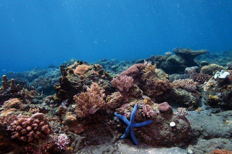 對抗氣候變遷的同時,卻意外造成了海洋酸化,生物性多樣化遭受衝擊的影響。 圖/新華社